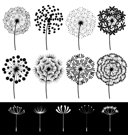 Beautiful dandelions set