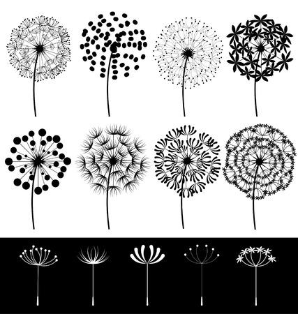 Beautiful dandelions set