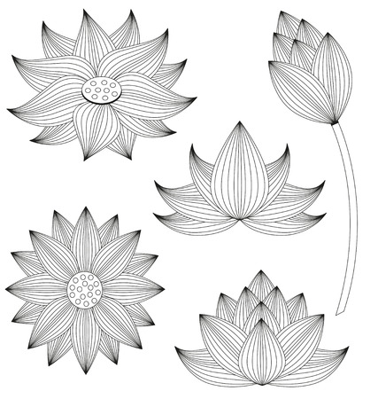 white lotus flower: Lotus flower set on white background