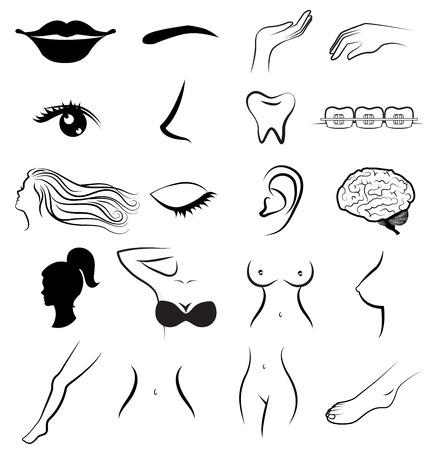 women breast: Women body parts human vector Illustration