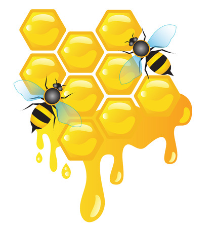 worker bees: Worker bees on honey cells with honey dripping vector Illustration