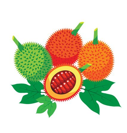 spiny: Gac Fruit Health Benefits with leaf for organic concept Illustration