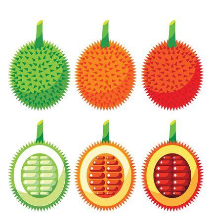 Set of Gac Fruit Health Benefits for organic concept
