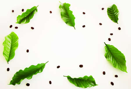 Frame of Arabica coffee leaves and coffee beans roasted on white background Фото со стока