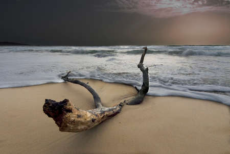 The trunk that returns from the sea