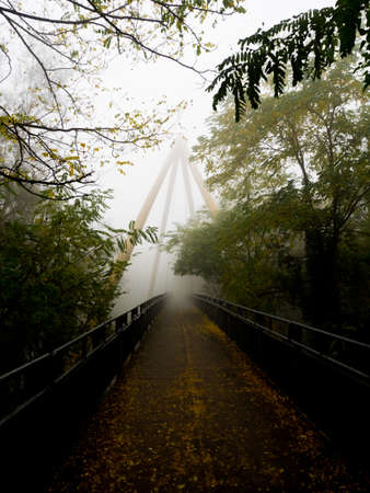 Autumn day with fog at the park