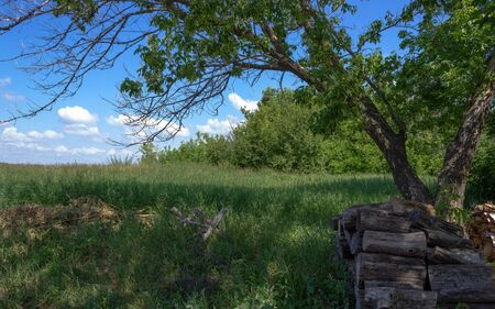 Firewood lies in the shade of a tree. Maple with green leaves and dry branches. Countryside view of the meadow with thick green grass and shrubs. Small white clouds in the blue sky. Some mowed grass. Stock fotó