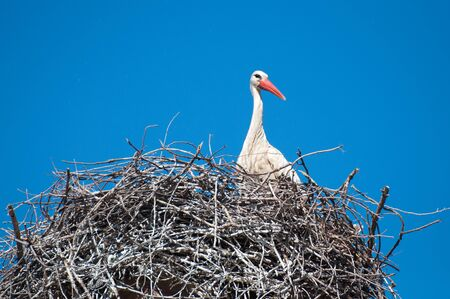 A white stork in its nest at the top of a battlement. Banco de Imagens