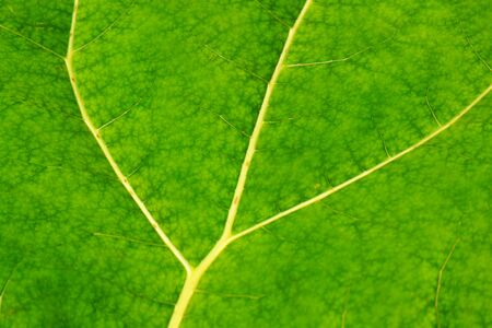 Green leaf texture background plant veins details