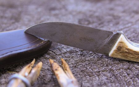 Camping damascus blade knife, sheath and sticks on old wooden log, in nature