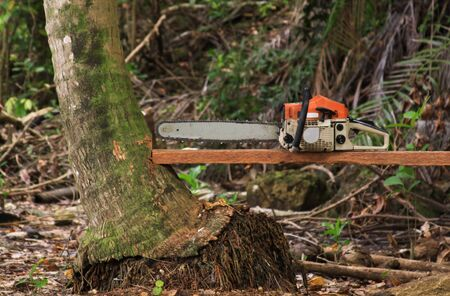 Chainsaw on wood used for cutting down trees in the forest in Sumatra, Indonesia