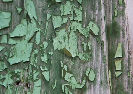 Green paint peels off old timber texture Stock Photo
