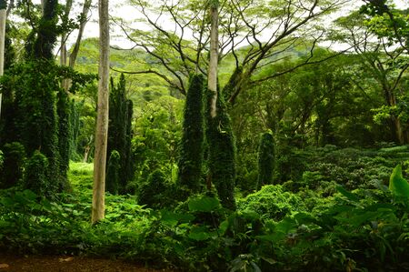 Jungle Island After A Morning Of Rain. Oahu, Hawaii, USA, EEUU.