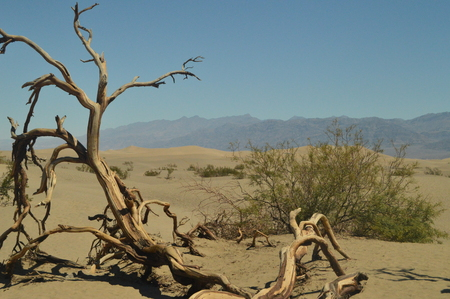 Wonderful Views Of The Mohave Desert Dry Trunk. The Lowest Place Below The Sea Level. Gigantic Salt Lagoons. Travel holydays Geology. June 28, 2018. Death Valley California. EEUU. USA.