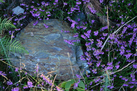 Beautiful Stone Surrounded By Mallow Flowers In Rebedul Meadows In Lugo. Flowers Landscapes Nature. Rebedul Becerrea Lugo Galicia Spain. Banco de Imagens