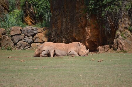 Portrait Rhinoceros Lying The Natural Park Of Cabarceno Old Mine Of Extraction Of Iron. August 25, 2013. Cabarceno, Cantabria. Holidays Nature Street Photography Animals Wildlife Stock Photo
