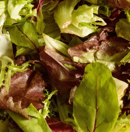 Fresh Rucula and Green Lettuce Salad Foto de archivo