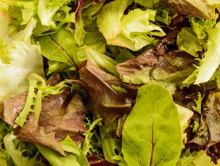 Fresh Rucula and Green Lettuce Salad