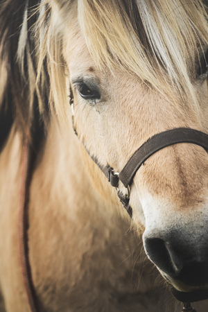 Nice close-up of the head of a brown horse