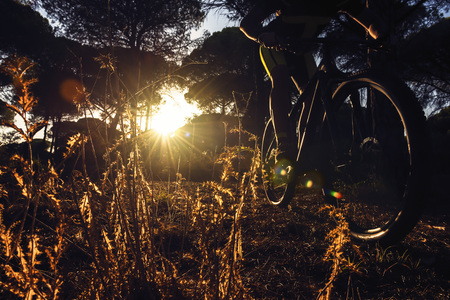 backlit cyclist riding at sunset through a pine forest on his mountain bike, the sun's rays sneak between the trees and illuminate the plants in the foreground. Dark Mood