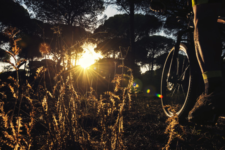 backlit cyclist riding at sunset through a pine forest on his mountain bike, the suns rays sneak between the trees and illuminate the muscles of the leg in tension and the plants in the foreground