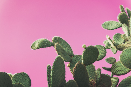 green Prickly Pear Cactus on pink background, creative pop art style with pastel shades, copy space for text