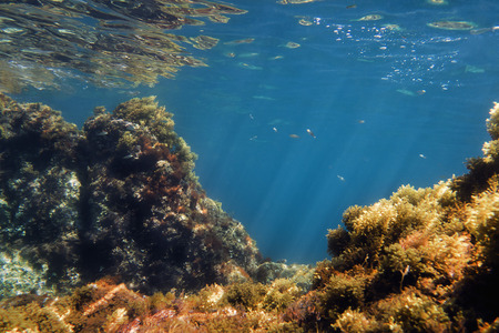 seabed background, the suns rays are drawn in the crystal clear water in which there are fish, and the rocks full of algae are reflected in the curly surface of the ocean