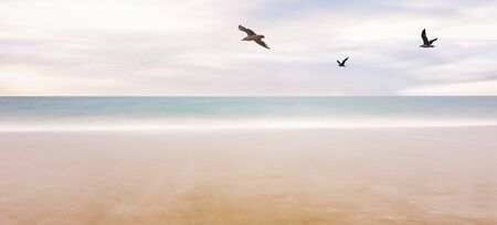 three seagull birds flying over the foggy sea, freedom and relaxation concept Imagens