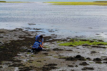 couple of men shellfishing in the ria del burgo, coruña, at low tide, they collect mainly clam and a razor
