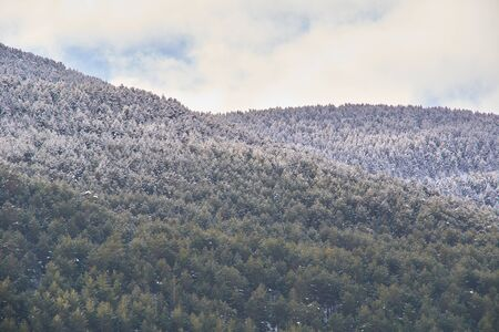 Snowy and cold mountain forest landscape. Loneliness and tranquility