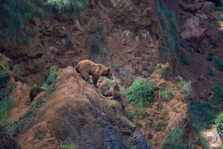 Two wolverines played on a rock in the mountain. Childhood games 스톡 콘텐츠