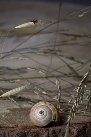Brown snail, on tree trunk, age rings, lines, plants, macro photography