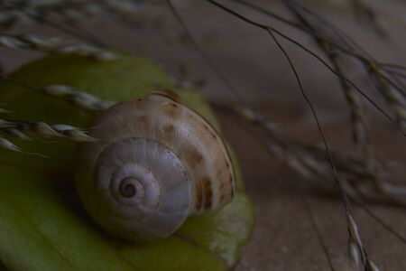 Brown colored snail, on tree trunk, age rings, lines, plants, water drops, macro photography