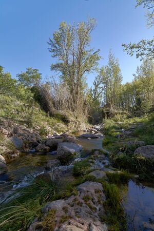 Small stream among the vegetation, pine trees, green, sunny day Foto de archivo