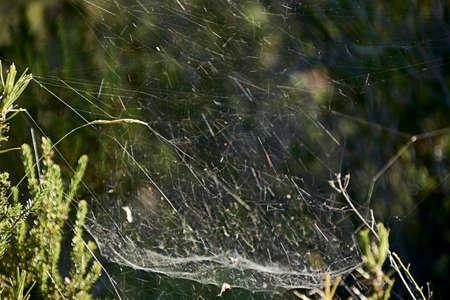 spider web among the vegetation, macro photography, details