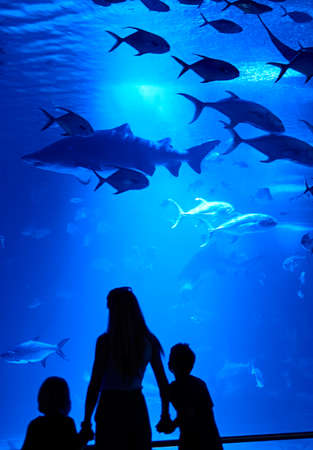 Woman with two children watching fish, sharks, blue, light, blue Фото со стока