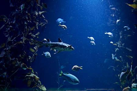Set of goldfish in the ocean, clear sand, sea bottom, dark