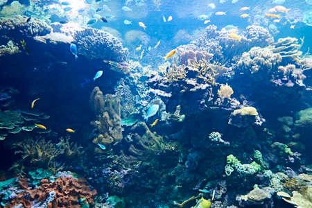 Brightly colored fish in the vast ocean, multicolored, luminous, life, rocks, algae,