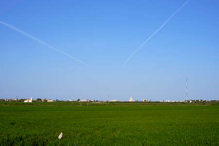 Cultivated rice fields with illuminated sky, blue, green, lines in the sky