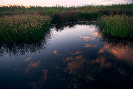 Reflections of clouds in the lake, sunset, vegetation,