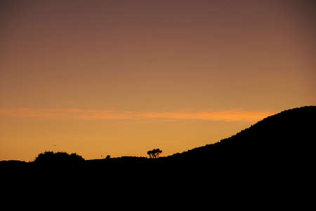 Silhouette of trees in a sunset, black and orange, birds