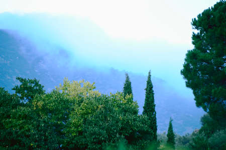 Landscape of trees full of clouds, cold, green in autumn