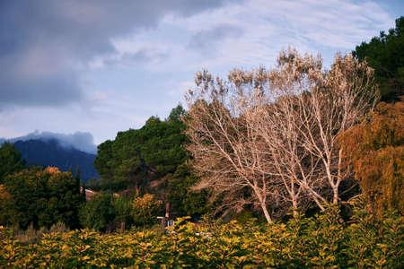 Autumn tree landscape, cloudy sky, fall colors