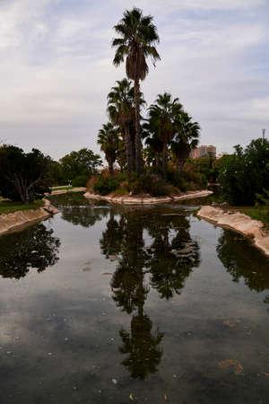 Reflections of a palm tree on the water, urban, vegetation 版權商用圖片