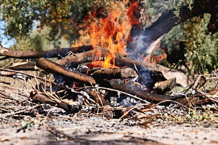 Bonfire in the bush on a sunny day, fire, wood, outdoors 版權商用圖片