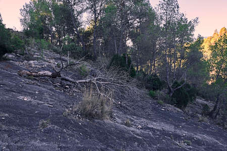 Pine fallen on a mountain from a large stone. dark, sunny forest 版權商用圖片