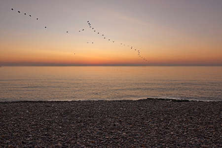 Birds flying on the beach at sunrise, rocks, orange color, tranquility