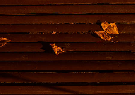 Fallen tree leaves on park bench, dry, autumn, brown, warm
