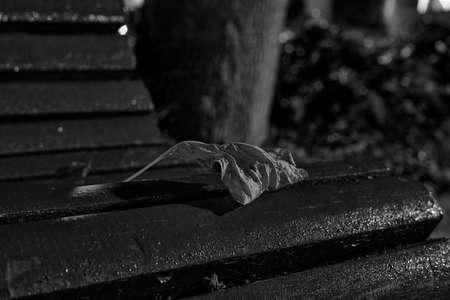 Tree leaf fallen on bench in park, dry, autumn, brown, warm, black and white 版權商用圖片