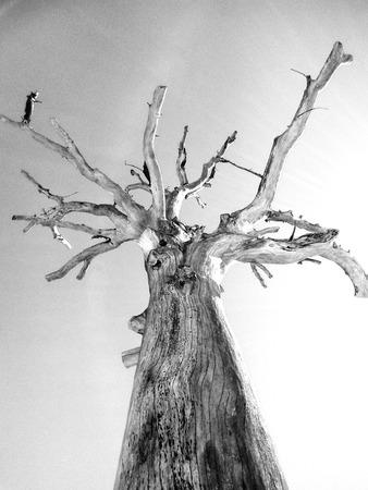 Dead Tree Archivio Fotografico